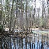 Vernal Pond (Ontario Vernal Pond Association)