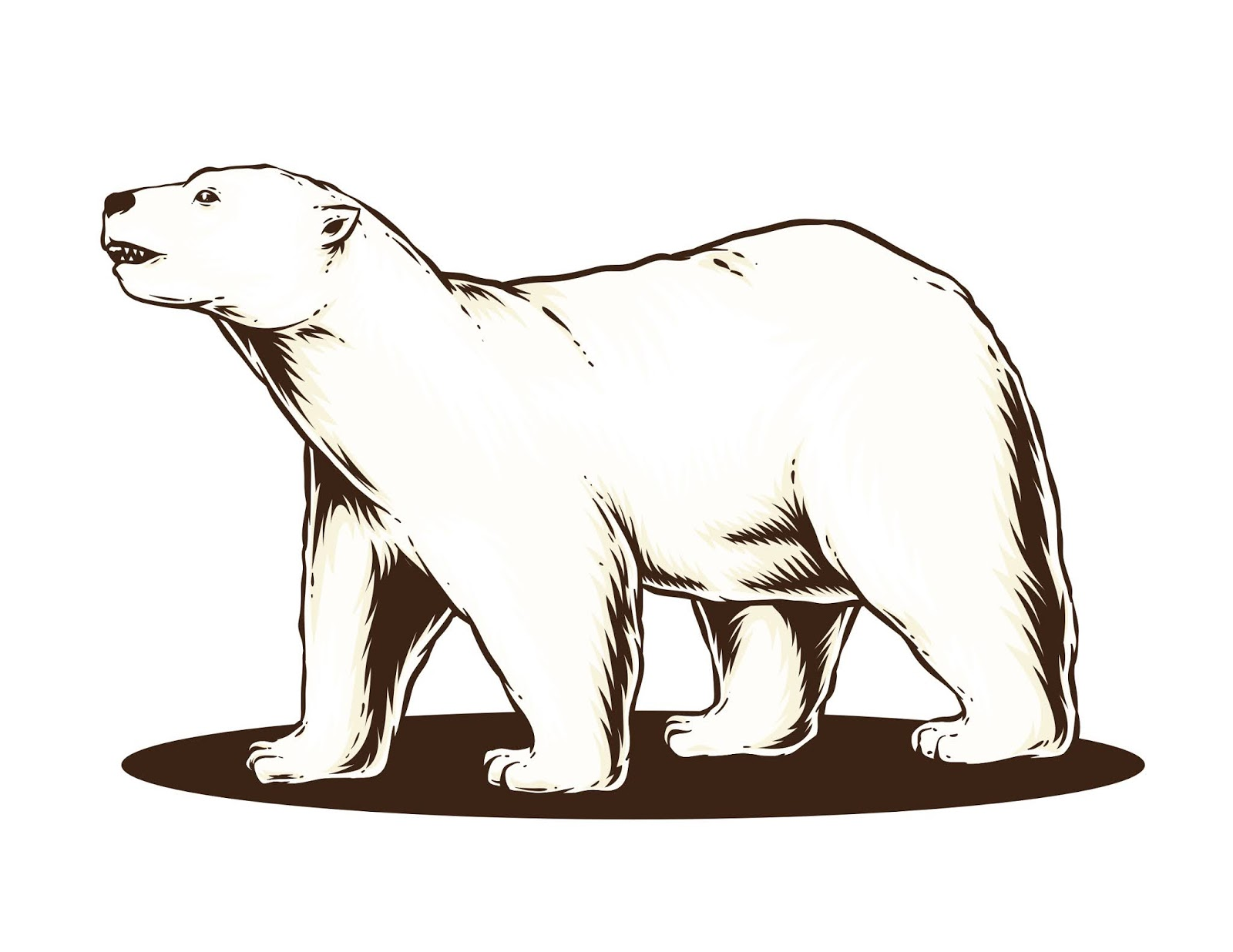 Polar Bear Vector Free Download Vector CDR, AI, EPS and PNG Formats