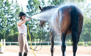 رعاية الخيول