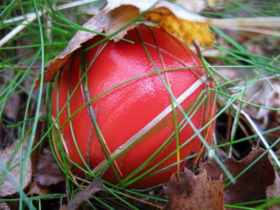 muchomor jak pomidor