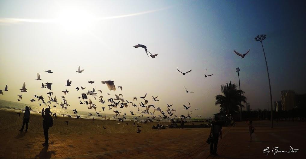 Bồ cầu rợp trời tại bãi biển Phạm Văn Đồng