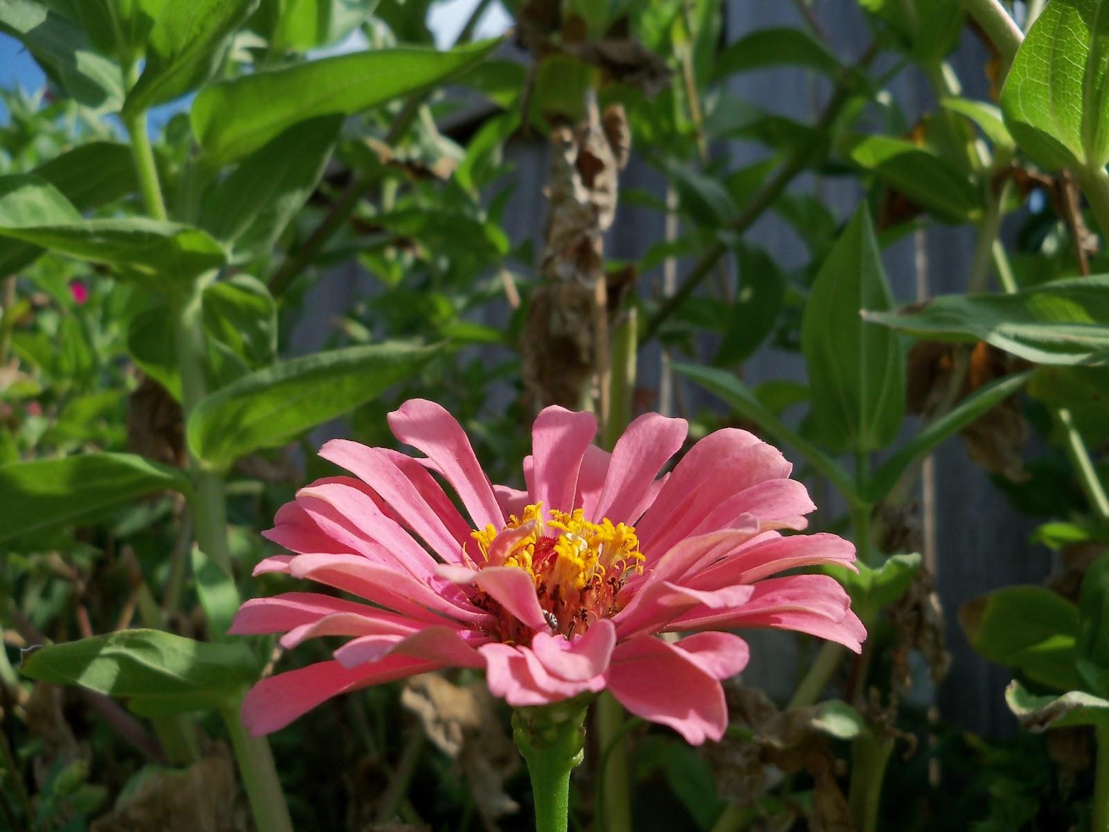 Gardening 2011 - 100_0092.JPG