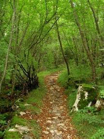Trail to Skocjan Cave, Slovenia