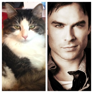 Ian Somerhalder Doppelganger Anakin The Two Legged Cat