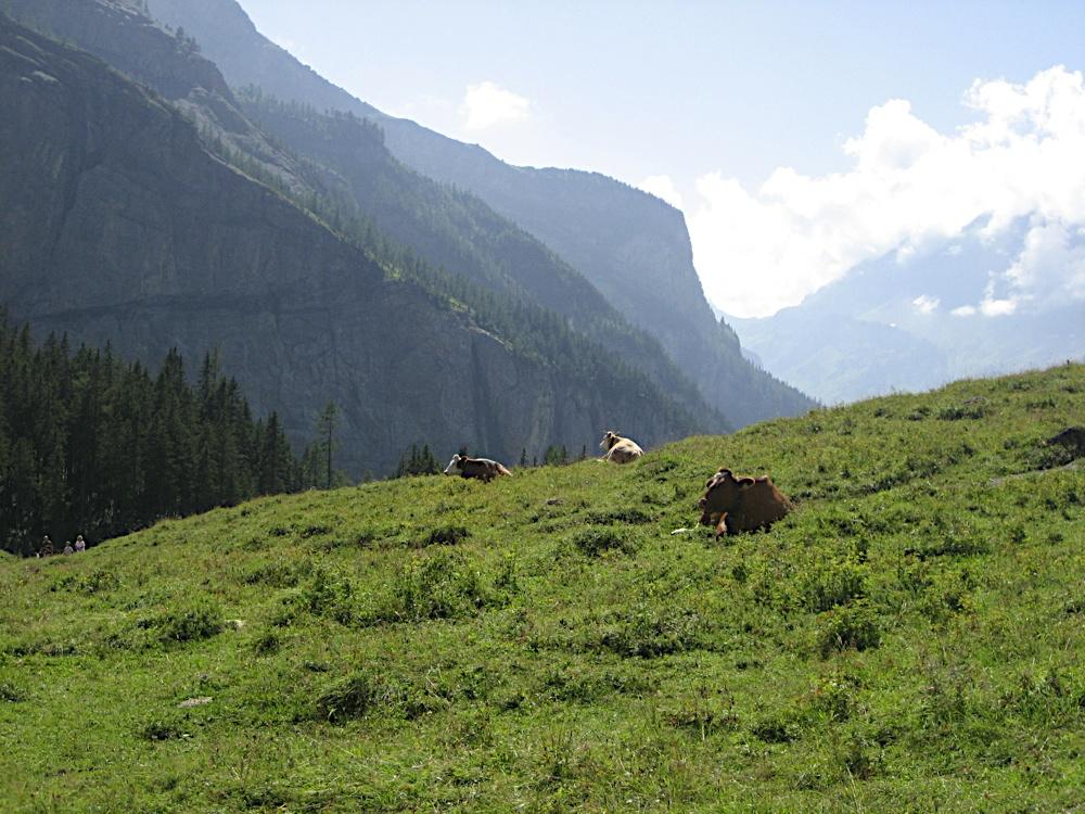 Campaments a Suïssa (Kandersteg) 2009 - IMG_3657.JPG