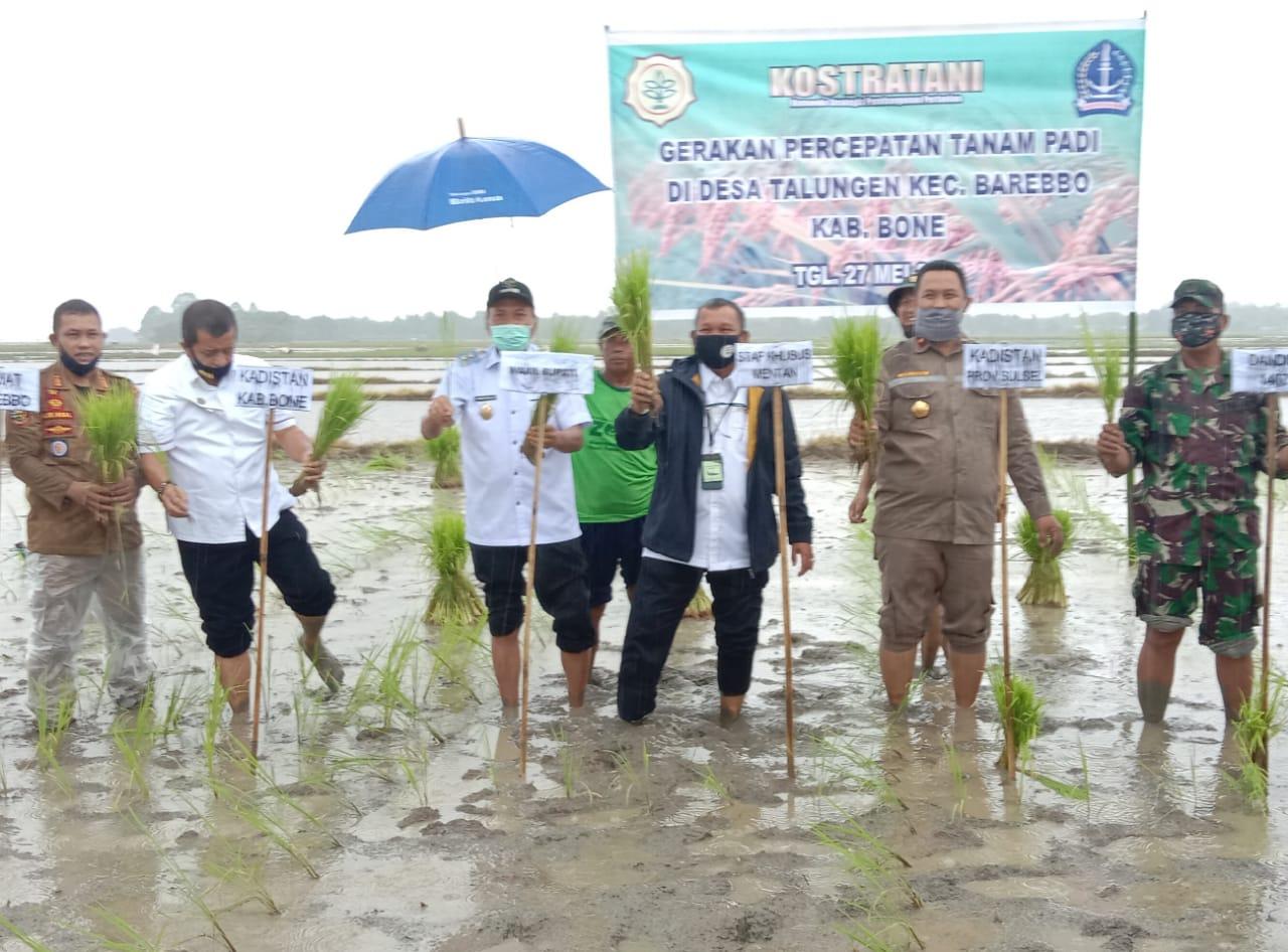 Staf Ahli Kementan RI Bersama Wabup Bone Tanam Padi di Desa Tulungeng