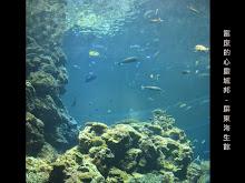 國立海洋生物博物館-海底世界