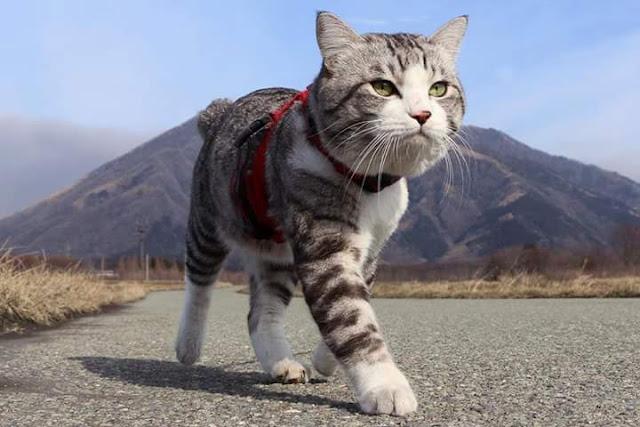 Drh Fandi Akbar Manusia Yang Menyebabkan Kucing Terkena