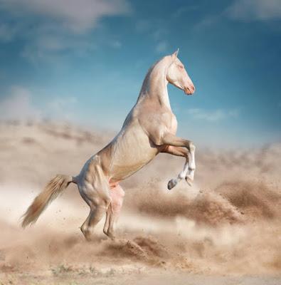 Akhal Teke (अखल-टेके)   ये घोड़ा स्वर्ग से आया है