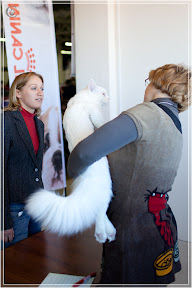 cats-show-25-03-2012-fife-spb-www.coonplanet.ru-011.jpg