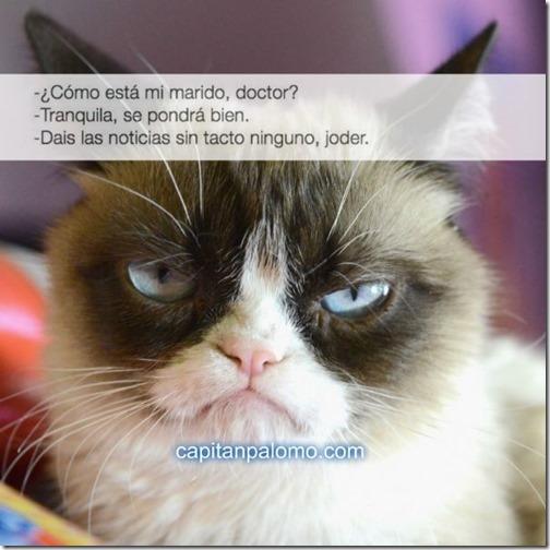 meme del gato gruñon (5)