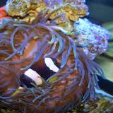 Downtown Aquarium - 116_3926.JPG
