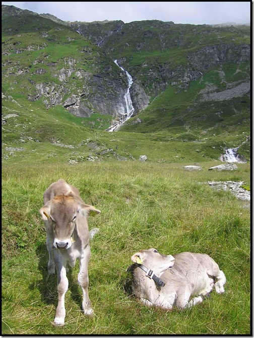 2703-Foals-at-Kesselalm