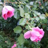Gardening 2012 - IMG_3538.JPG