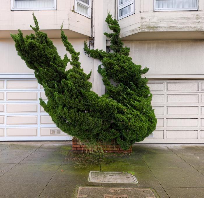 alan-george-topiary-5