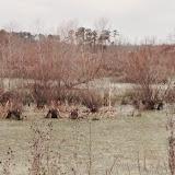 Anderson Creek Hunting Habitat - photo22.JPG