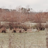 Anderson Creek Hunting Habitat - photo22.JPG