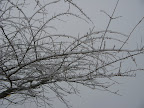 "Probably 1/4"" of freezing rain crackled as the trees swayed in the wind."