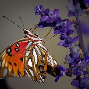 by Edwin Madera - Nature Up Close Flowers - 2011-2013
