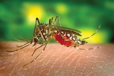 Surto de Dengue provoca aumento nos atendimentos da Santa Casa de São Roque