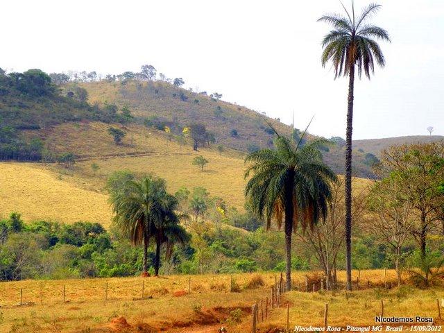 Pitangui (MG, Brésil), 15 septembre 2012. Photo : Nicodemos Rosa