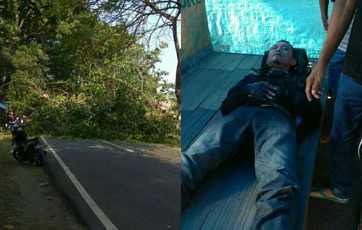 Pohon Tumbang Memakan Korban di Palabuhanratu - Sukabumi