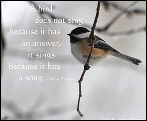 Bird quote Maya Angelou