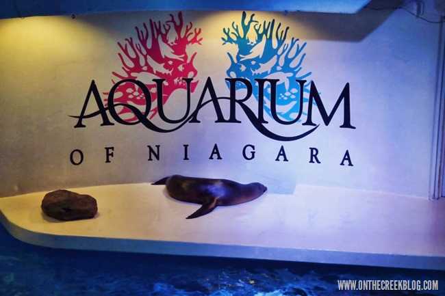 Aquarium of Niagara | On The Creek