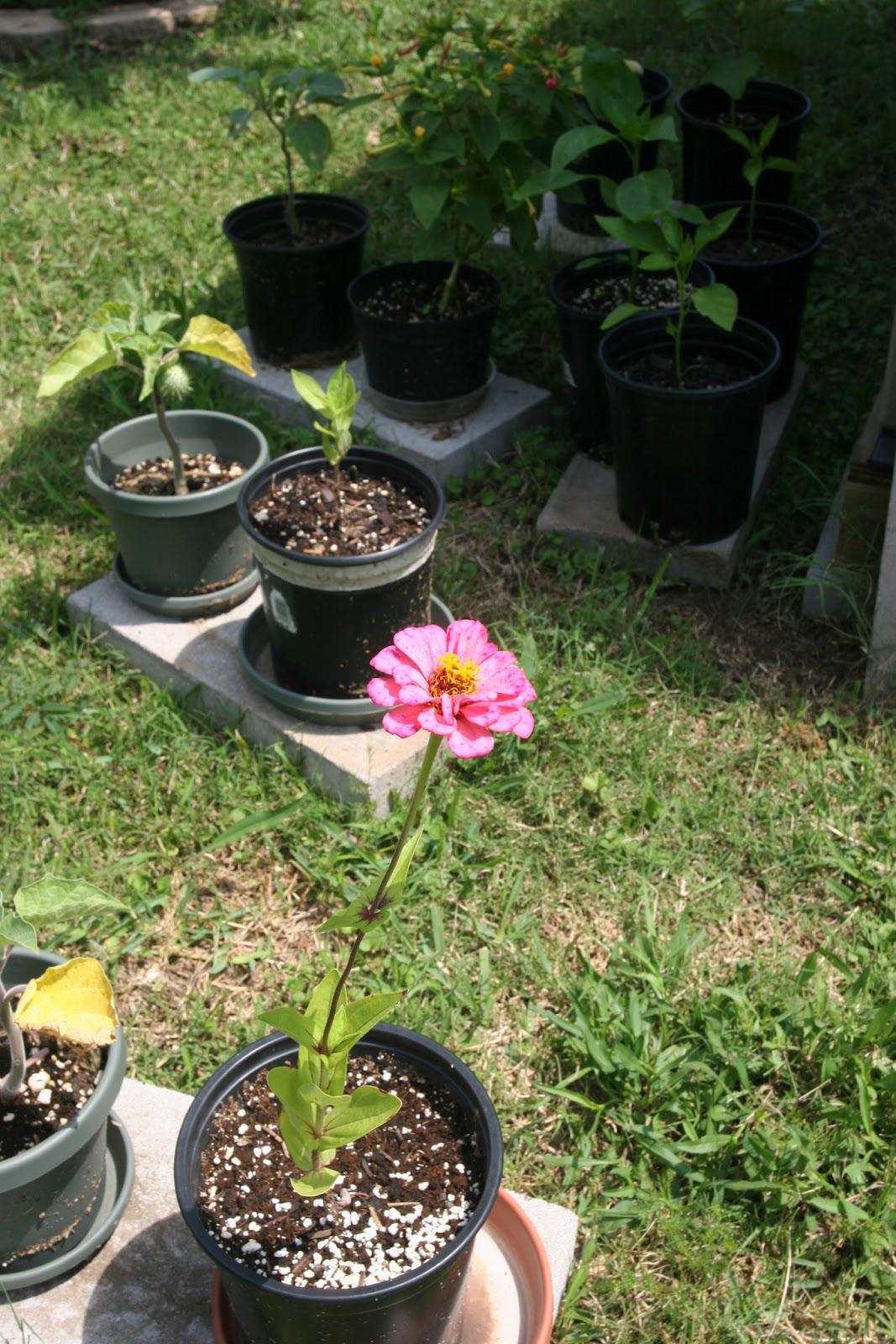 Gardening 2012 - IMG_3795.JPG
