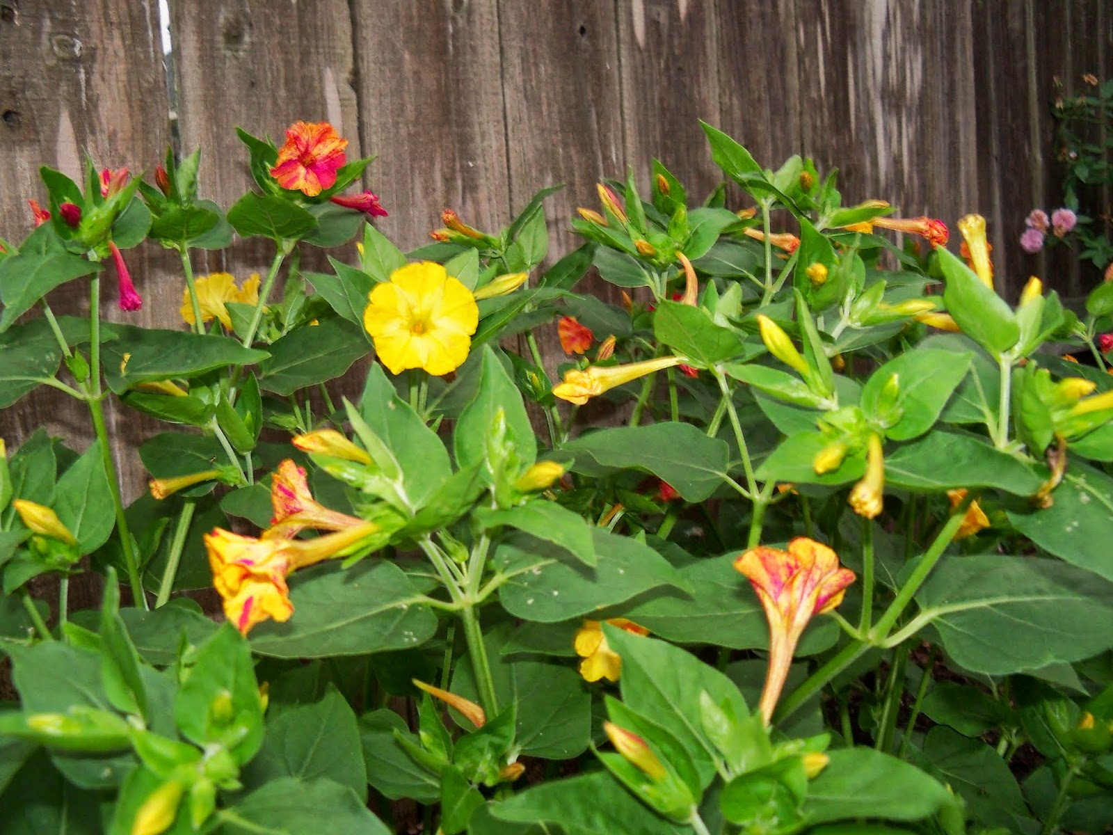 Gardening 2014 - 116_1962.JPG