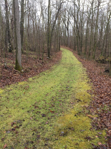 Ski trails showing a bit more green with recent rain. We will be mowing/grooming the trails as soon as the grass is long enough!