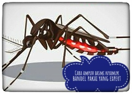 cara ampuh basmi nyamuk