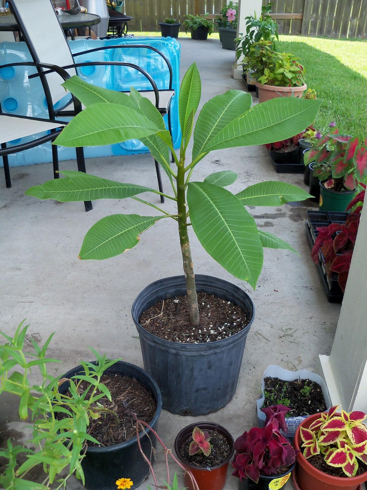 Gardening 2010, Part Three - 101_4910.JPG