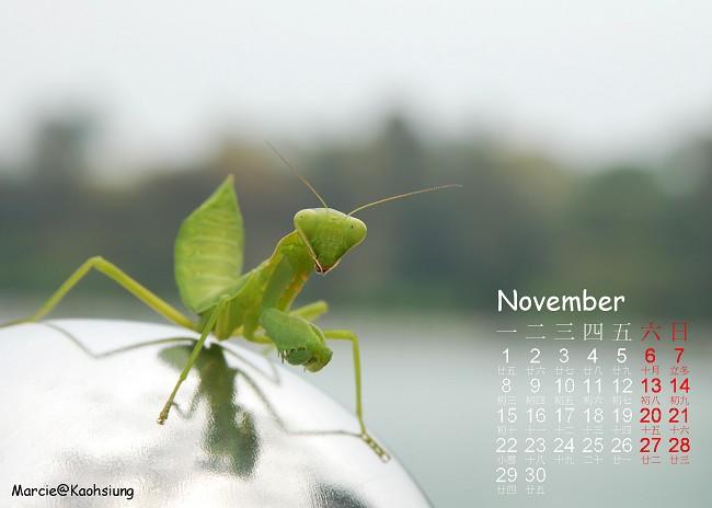 diy 月曆 高雄 十一月 生態