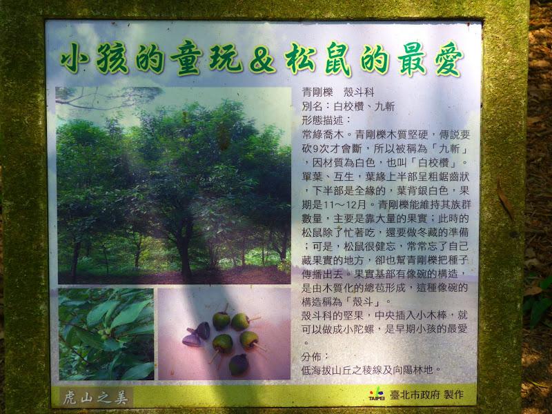 Taipei. Si Shou Shan, et la découverte des maisonnettes du professeur Y I   易教授 - P1340633.JPG