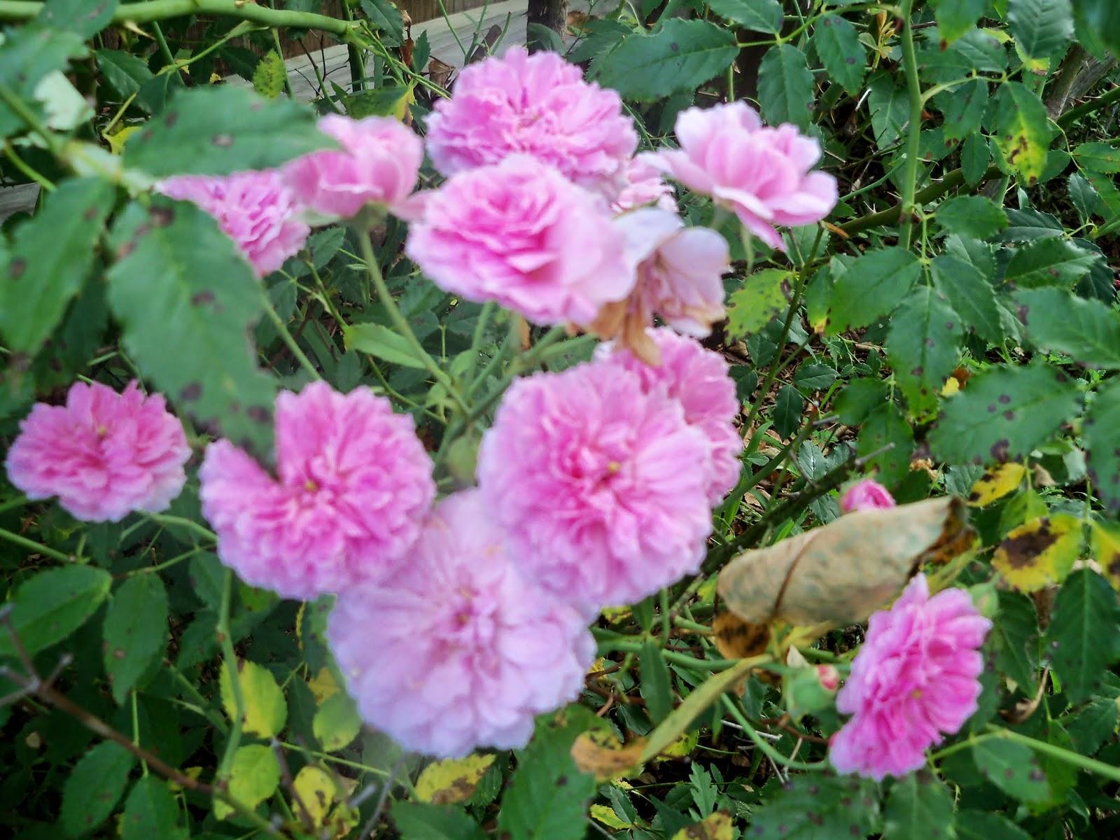 Gardening 2014 - 116_3413.JPG