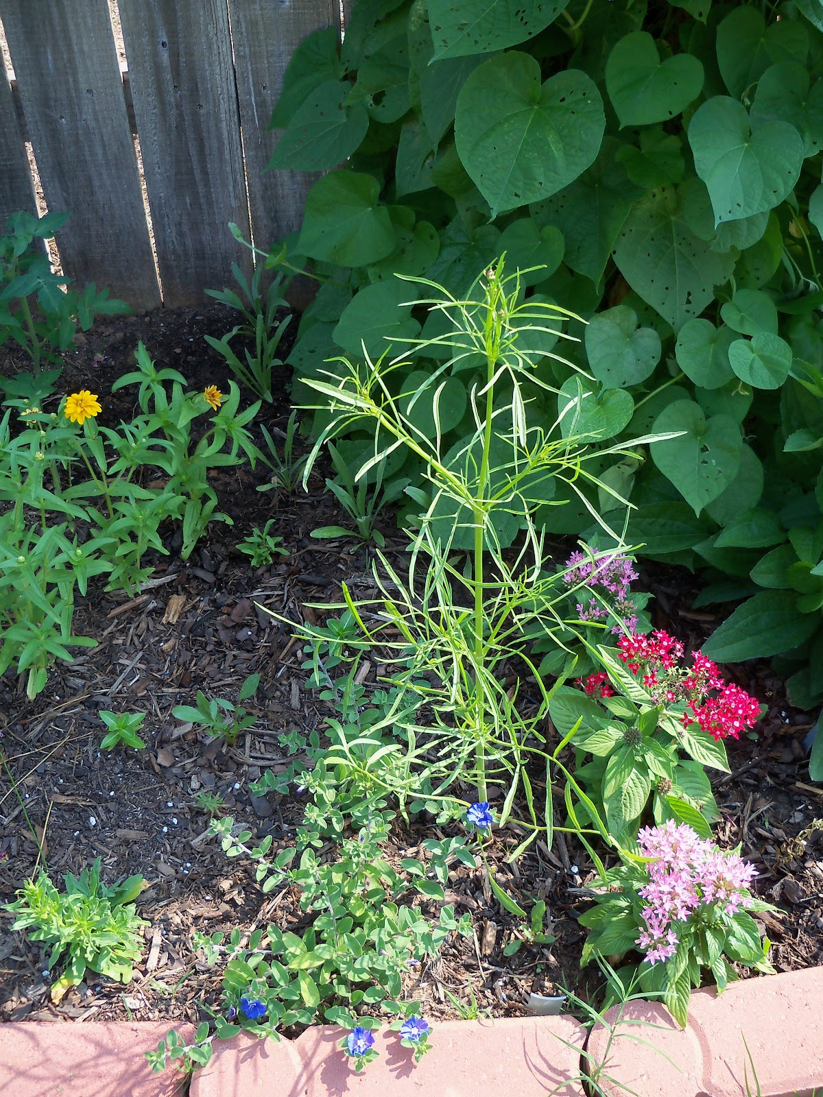 Gardening 2010, Part Two - 101_3051.JPG