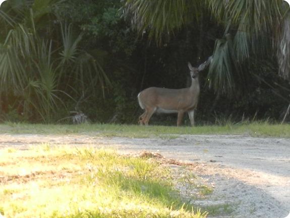 9 Deer Mammal