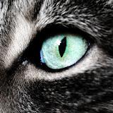 animal_0131.jpg