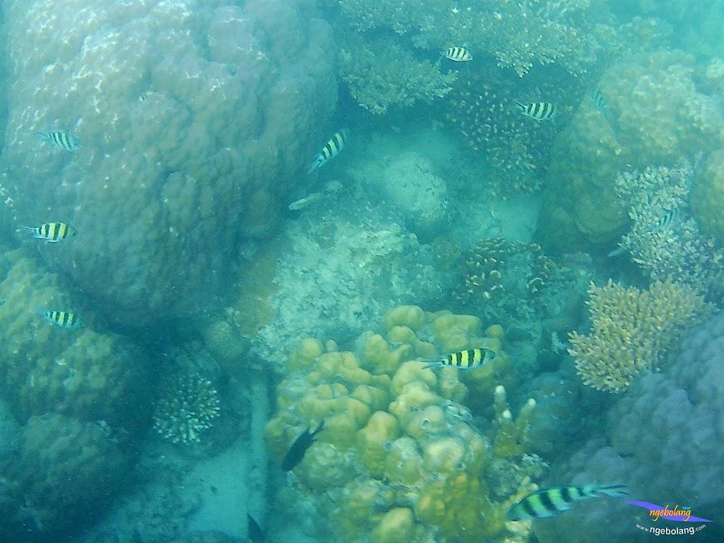 family trip pulau pari 090716 GoPro 06