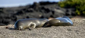 Ecuador-Galapagos-Ferandina-180219-0059-ToWeb