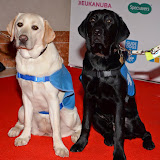 WWW.ENTSIMAGES.COM -         at       Guide Dog of the Year Awards at London Hilton Park Lane London December 10th 2014Annual awards which celebrate the partnership between guide dogs and their owners.                                              Photo Mobis Photos/OIC 0203 174 1069