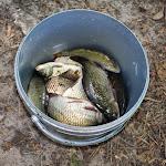 20140801_Fishing_Bochanytsia_017.jpg