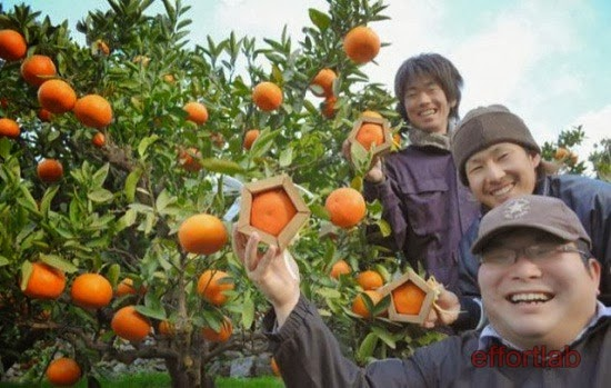 iyokan-pentagon-ehime-prefecture