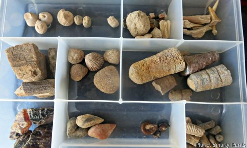 Fossil-Collection