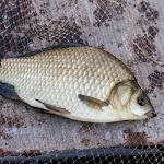 20150613_Fishing_Virlia_015.jpg