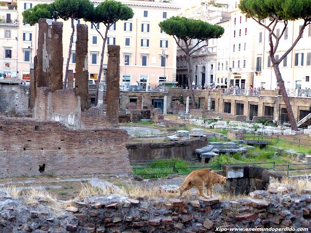 santuario-de-gatos-roma.JPG
