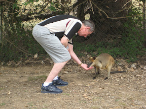Dad feeding a kangaroo