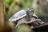 Turtle (© 2014 Bernd Neeser)
