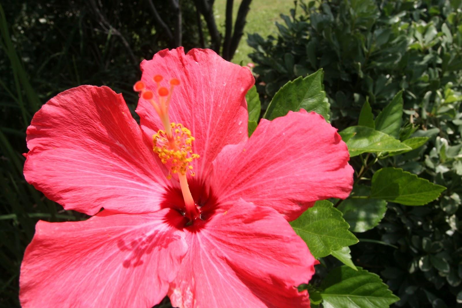 Gardening 2012 - IMG_3858.JPG